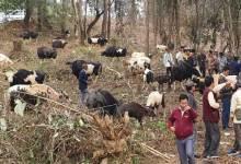 Arunachal: Mithun Mela held at Kimin