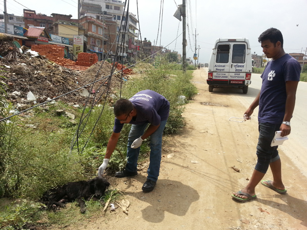 Mohan Maharjan jee and Ram Chandra Shrestha jee from Animal Nepal to the rescue!