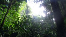 """""""...famed for its tropical cloud forests."""""""
