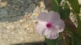 The wild flower