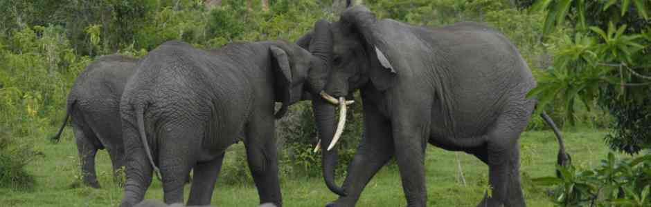 Elephants-and-Girrafes-in-Arusha-National-Park