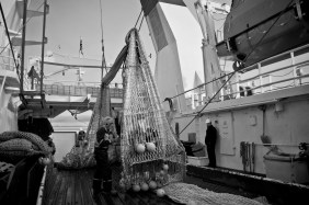 Research trawl (Photo: Valentina Lanci).