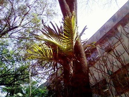a palmeira epifita