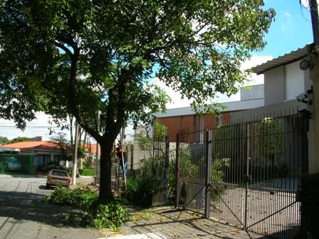 Poda criminosa na Rua Madre Linda Lucotti - São Paulo