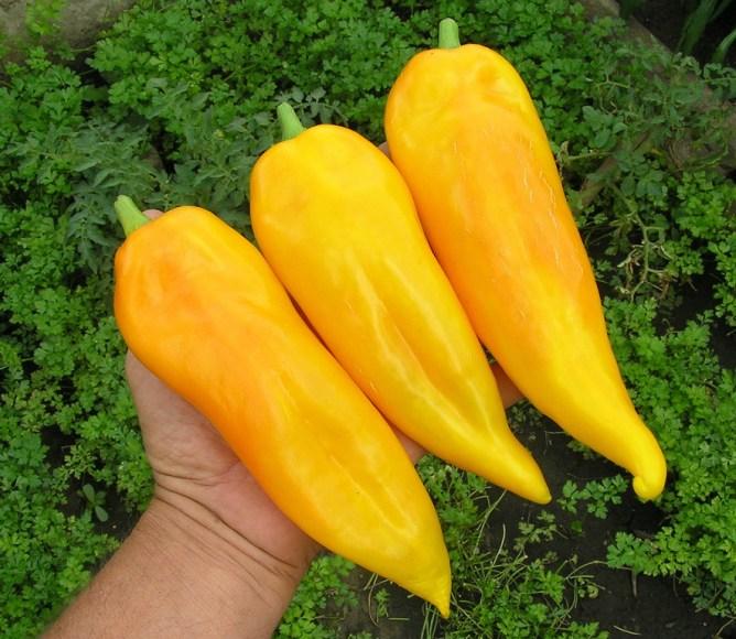 Банан Желтый