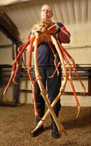 Le-crabe-araignee-geant-du-Japon-le-plus-grand-arthropode-vivant-photo-04