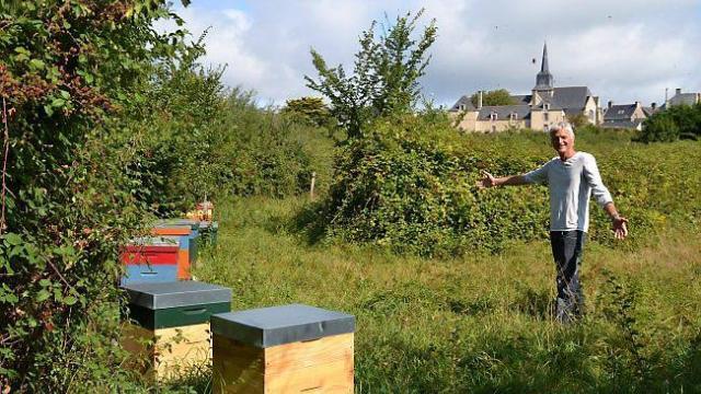 keroland-les-abeilles-de-luc-francois-depierre-butinent
