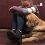Read more about the article The best reaction of animal when their owners cry