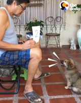 Read more about the article This dog is realy realy good at Mathematic