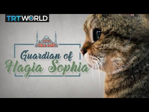 Meet the cat that guards the Hagia Sophia in Istanbul Turkey