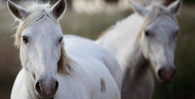 camargue-horse-riding-10