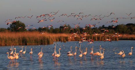 mv_flamingo_2012_0007