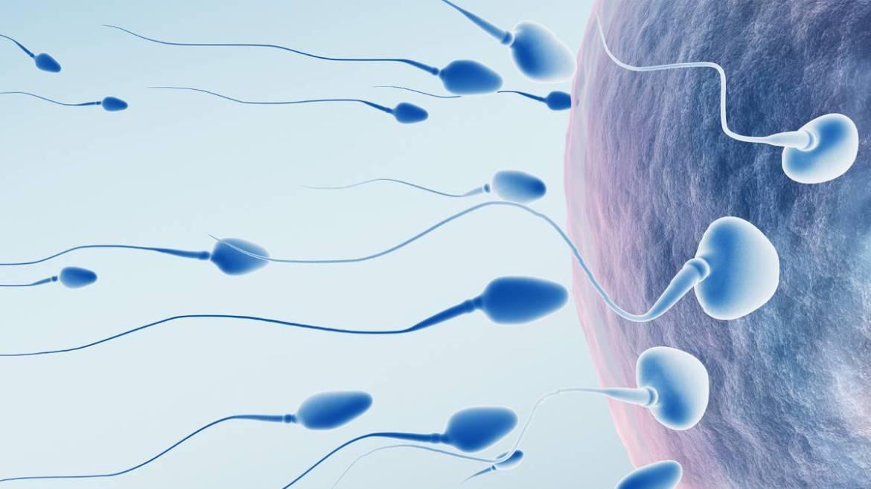 3 alimentos provocan mayor tasa de infertilidad en los hombres - AS.com