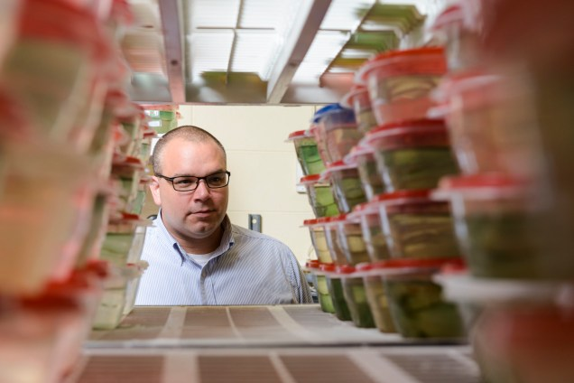 In Earley's lab, each fish lives in its own tupperware