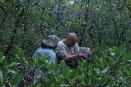 Earley catching fish in mangrove