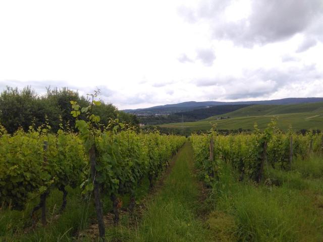 German winery