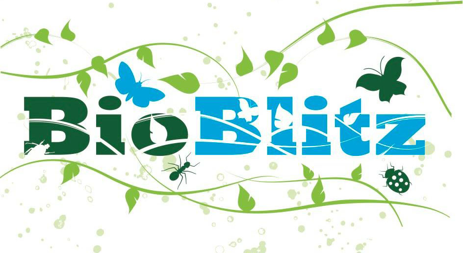 Graphic with the words Bio Blitz