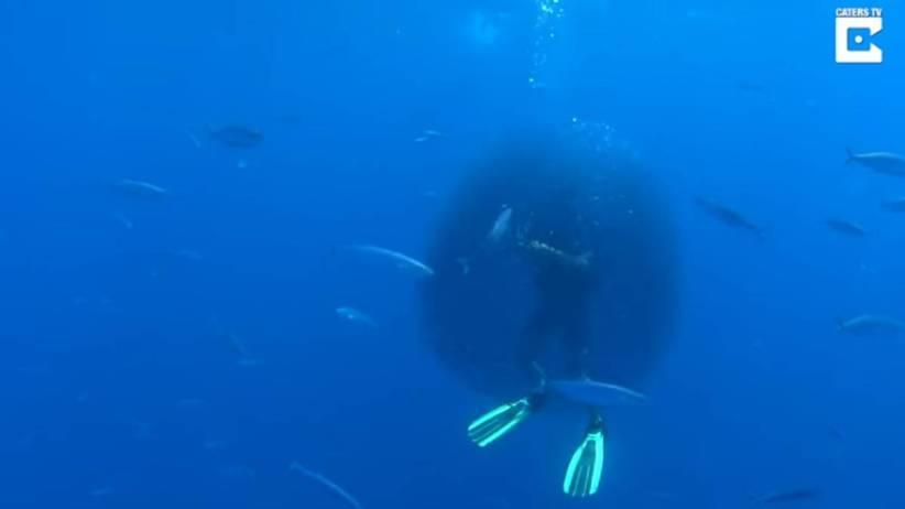 Un banco de peces rodea a un submarinista para salvarse de un enorme tiburón ballena