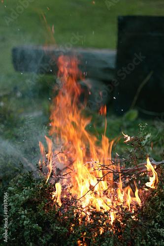 burning bush kaufen # 6