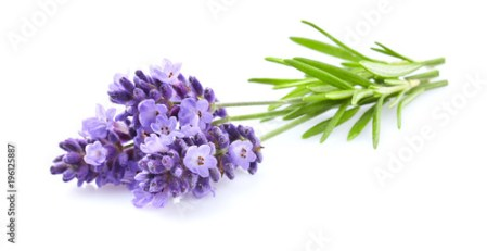 Lavender flowers in closeup   Buy this stock photo and explore     Lavender flowers in closeup