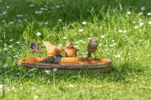 Baden in der Vogeltränke