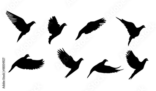 Flying Bird Vector Silhouettes Illustration Buy This Stock Vector And Explore Similar Vectors At Adobe Stock Adobe Stock
