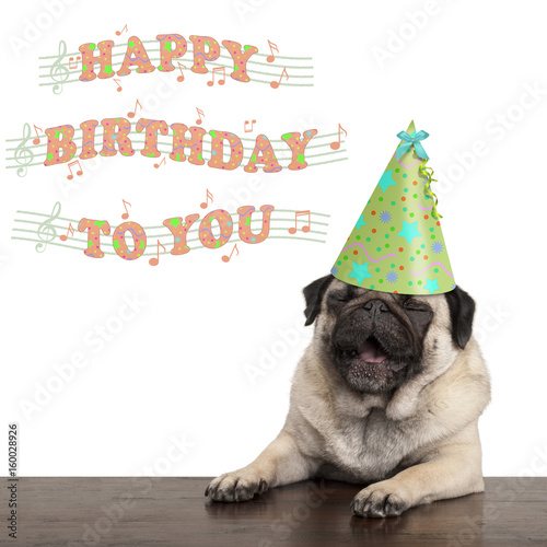 Adorable Cute Pug Puppy Dog Singing Happy Birthday To You Isolated On White Background Stock Photo Adobe Stock