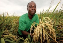 Photo of Ghana: New skills inspire farmers