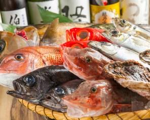 目利きで厳選された旬の魚