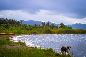legends have it that it was a hunter named Akora Bompe who discovered Lake Bosometwi and he was accompanied by his dog named Daakye -- which means future