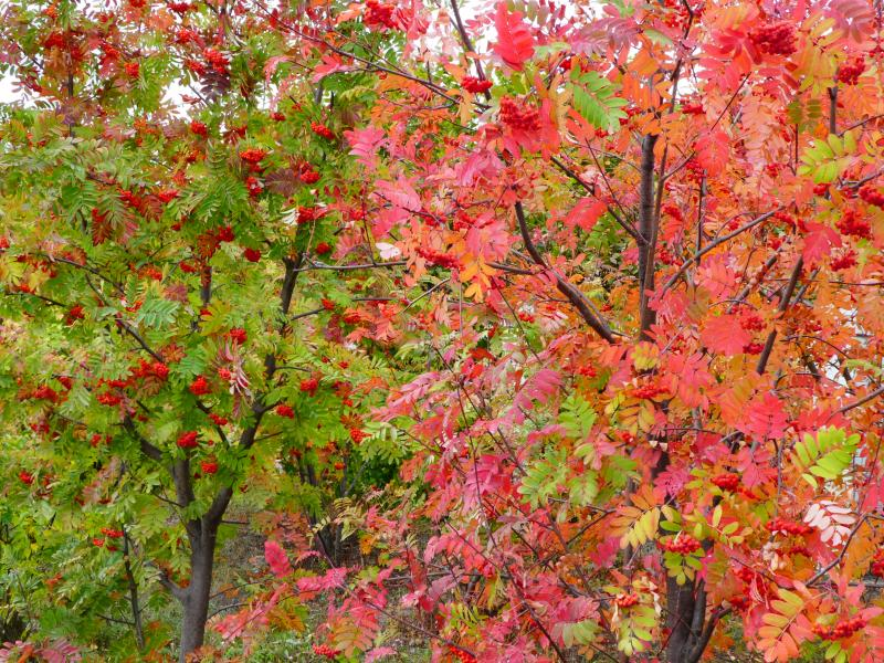 Árboles en Shiryaevo