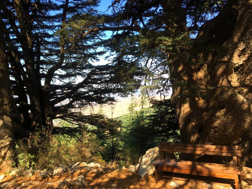 Reserva de cedros Barouk
