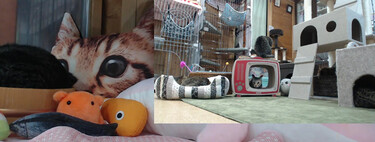 There is a Twitch that broadcasts cats 24 hours a day and has 20,000 followers.  In Japan, of course