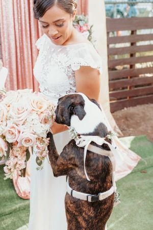 Asatre Wedding Dog Harness