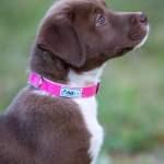 Asatre Hemp Pink Dog Collar
