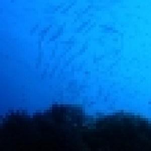 cic-plongee-2011-014