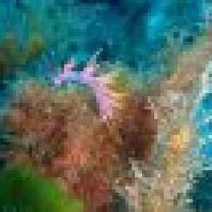 cic-plongee-2011-127