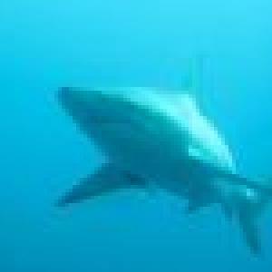 requin-borde