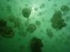 meduses 3.jpg nggid03365 ngg0dyn 100x75x100 00f0w010c011r110f110r010t010
