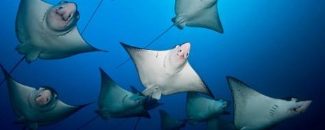 Gros bisous du monde sous-marin !