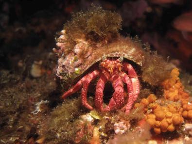 Crustacé 1