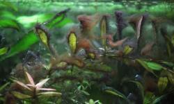 Виды водорослей и методы борьбы с ними