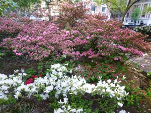 The Fifth Avenue Garden