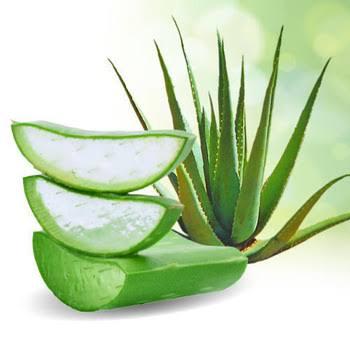 Aloe vera solution for Asthma Attack