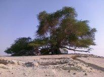 Bahrain Tree of Life (2)