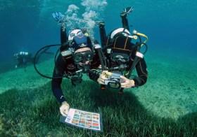 Niveau 2 Bio – Stage de biologie subaquatique
