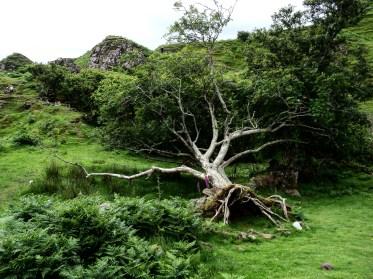 faerie-glen-tree