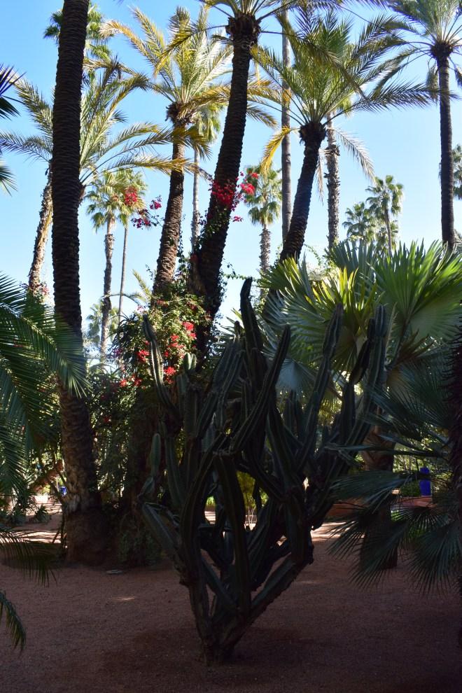 Marrakech Jardins Majorelle 5
