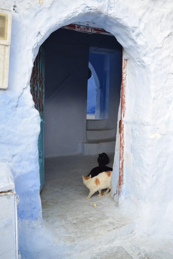 Marrocos Chefhaouen cidade azul quase entrando nas casas das pessoas 2