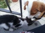 Puppy meets kitten